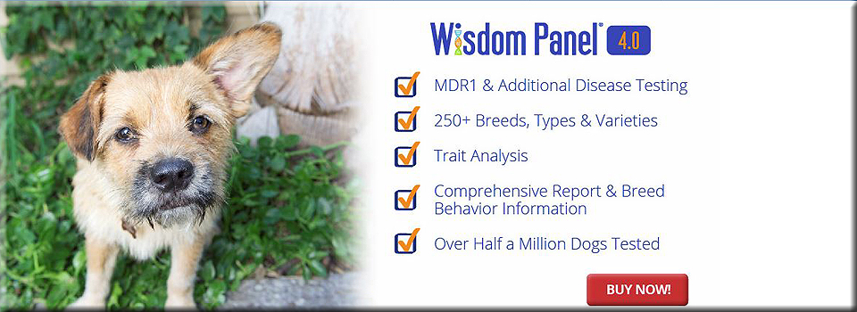 Wisdom Panel 4.0 new dog dna test